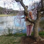 cherry_blossom_marie_16